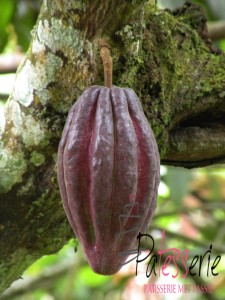 cacao en chocolade, patesserie.com