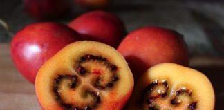 tomate de arbol, patesserie