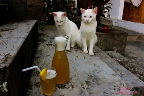 ananasschil, patesserie, drankje