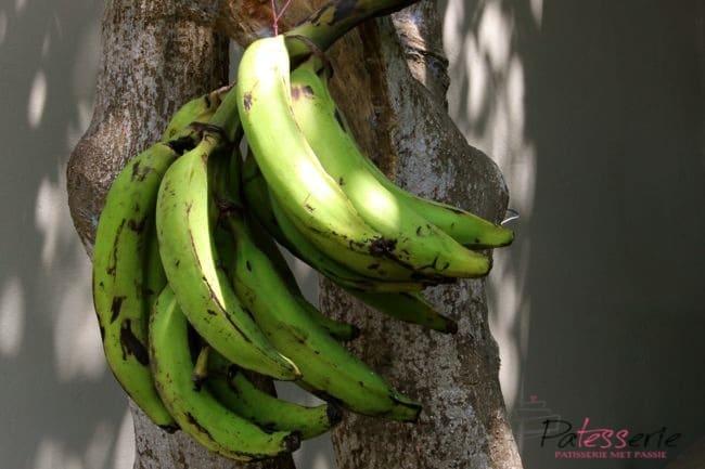 Ecuadorian patacones, plantains, patesserie.com