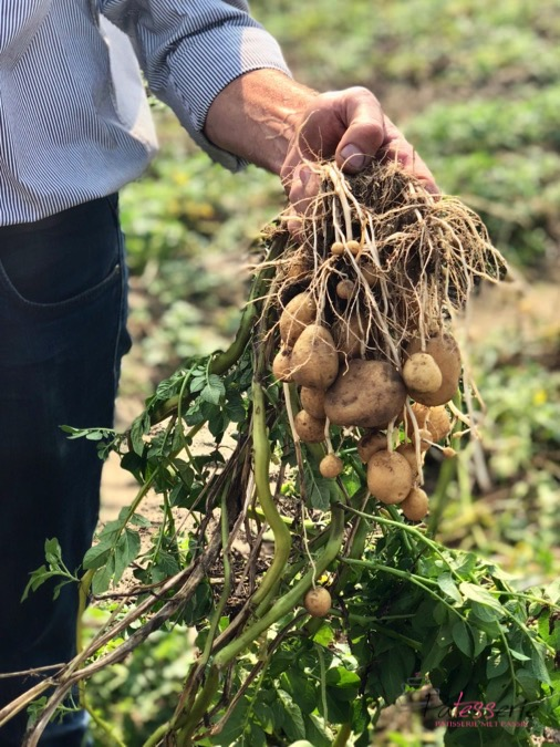 aardappelbrood, patesserie.com
